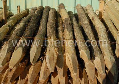 Piquets Acacia Robinier